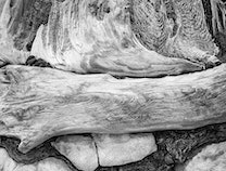 Photo of Rialto Beach Compositions