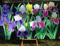Photo of Irises