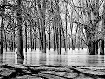 Photo of Water For Trees